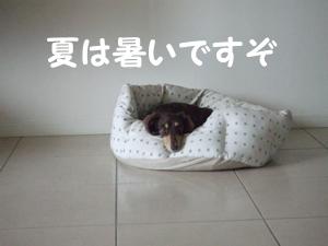 02_0908_01_Sl