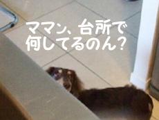 08_0908_01_WK