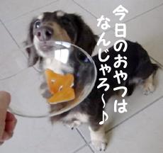 1001_15_03GP