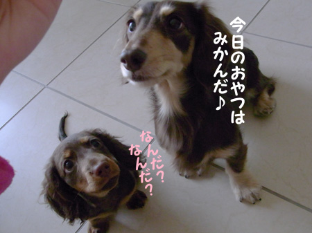 1004_04_03GC