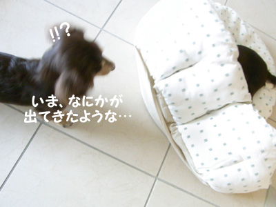 1004_05_03GC